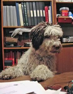 """El perro Curro de Antonio Lagares que inspiró la novela """"Bobo""""."""